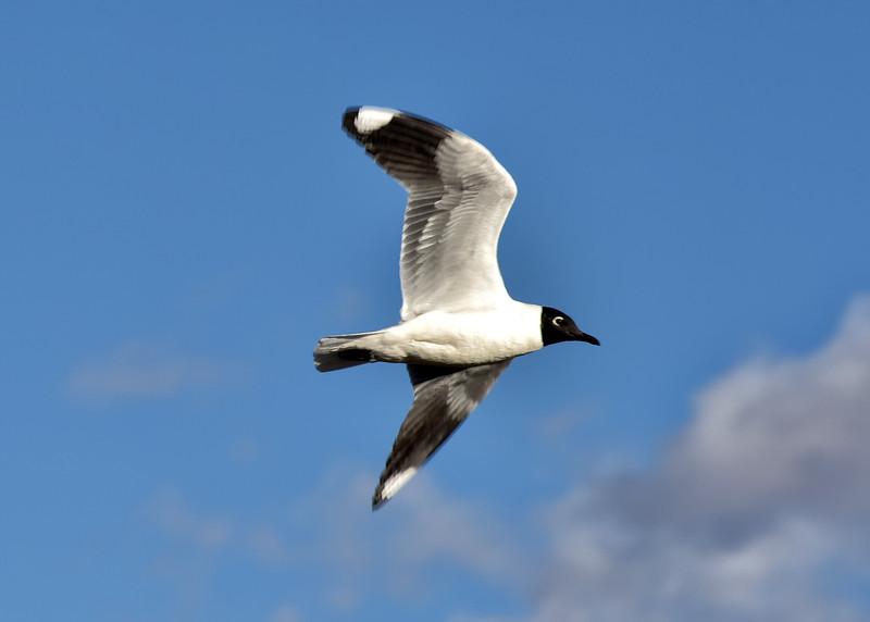BOL_2781-7x5-Bird.jpg