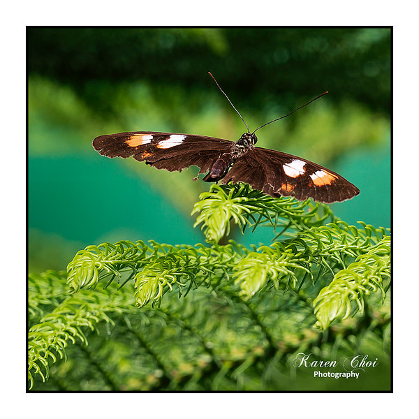 sm Brown Butterfly 3.jpg
