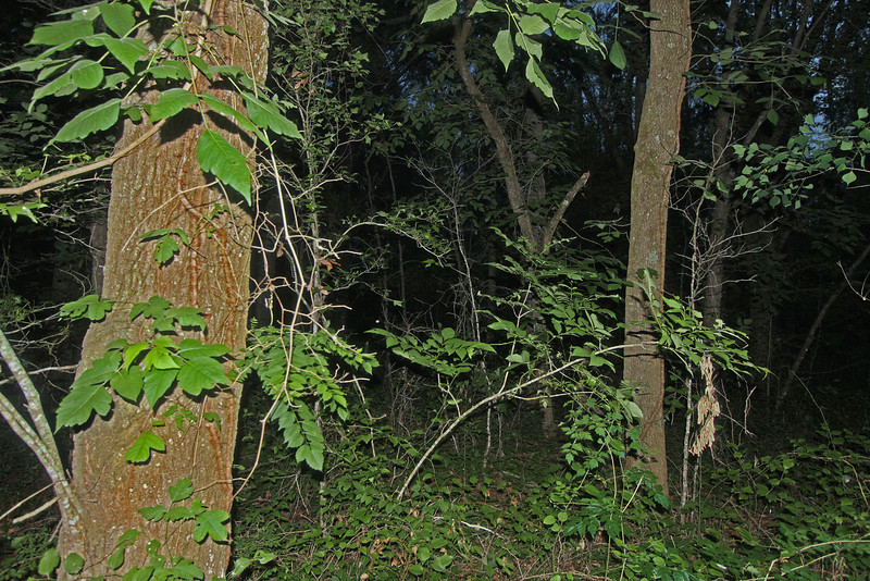WB~lakemartinwoods1600.jpg
