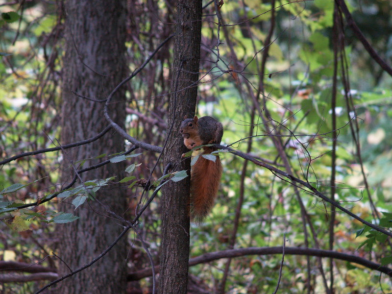 This squirrel was none too happy that a hawk swooped in and grabbed a mouse just before this photo was taken.