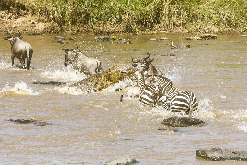 Kenya 2015-03778.jpg