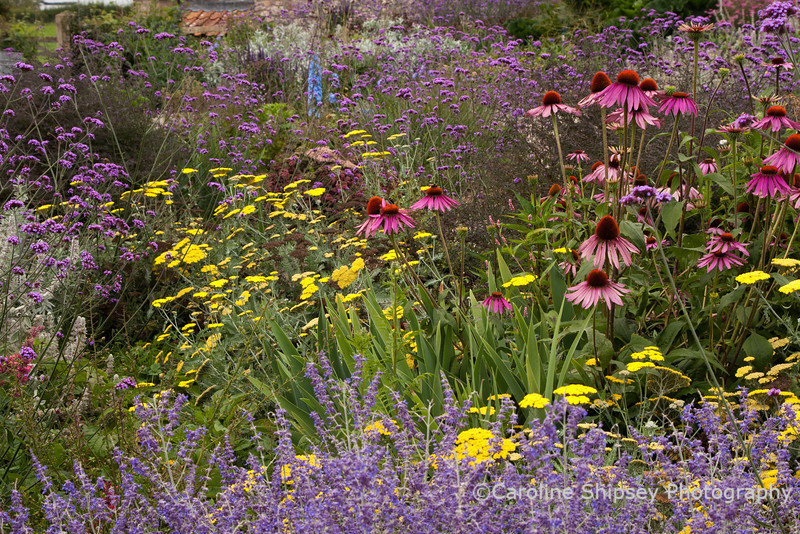 The Organic Gardens,Holt Farm-4972.jpg