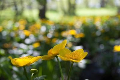 Saariston kevät