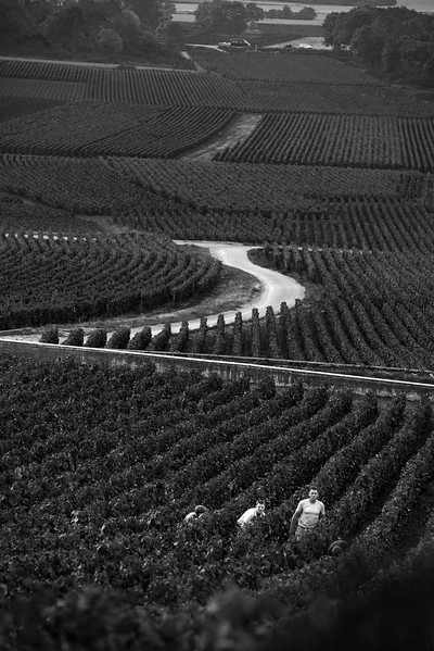 Burgundy_B&W_Vineyard_Workers_2048-.jpg