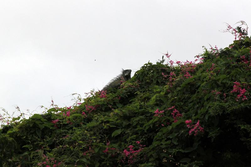 Curacao in Curacao 2010 106.JPG