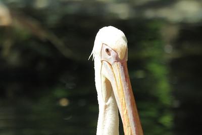 At the Zoo of Hanover 2015