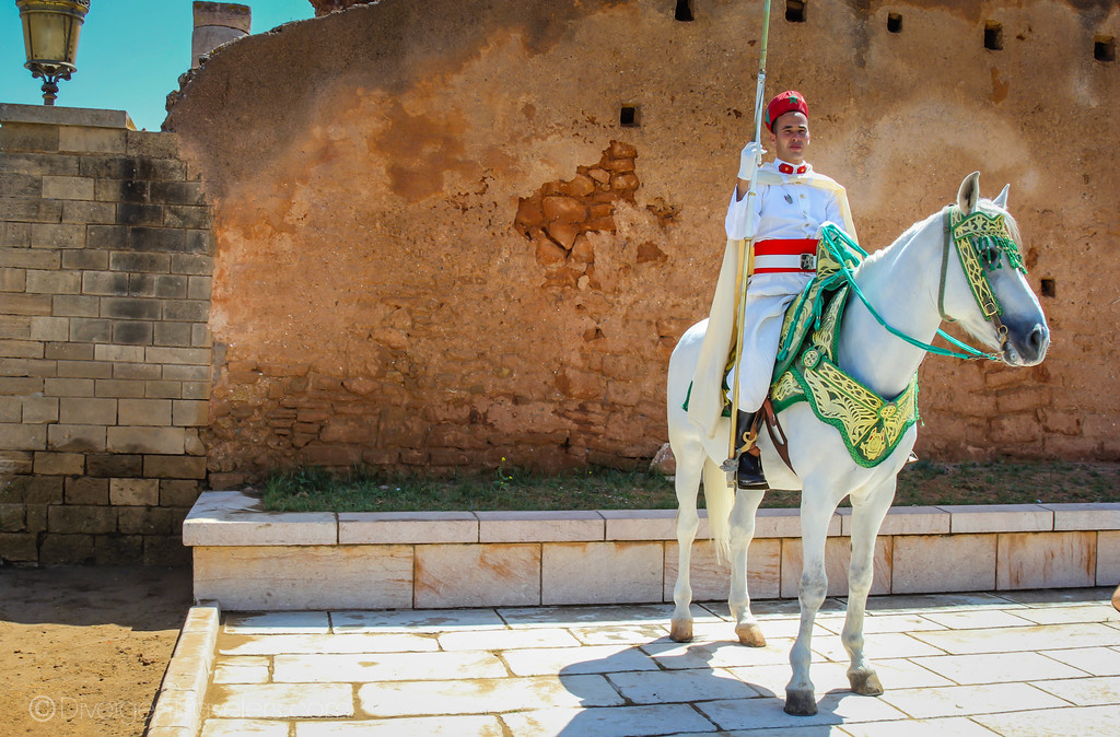 White horse and guard in Rabat, Morocco