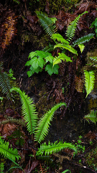 Rain Forest Plants, Bunch Falls