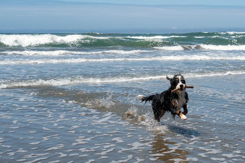 ocean beach quarantine 1184945-17-20.jpg