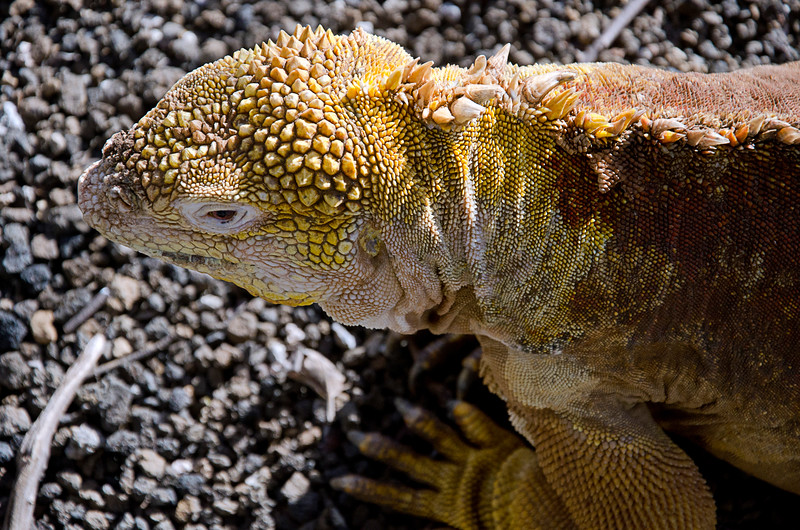 Galapagos-21-2.jpg