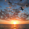 Seagulls in the Sunset