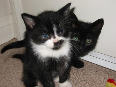 New Kittens 2002
