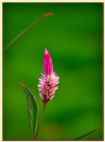 solitaryfloweredit.jpg