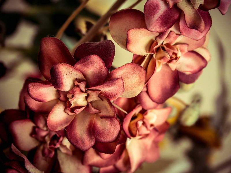 February 12 - Flowers.jpg