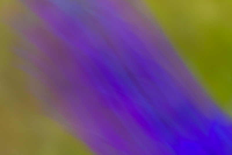 Streaks of abstract purple against a field of green.
