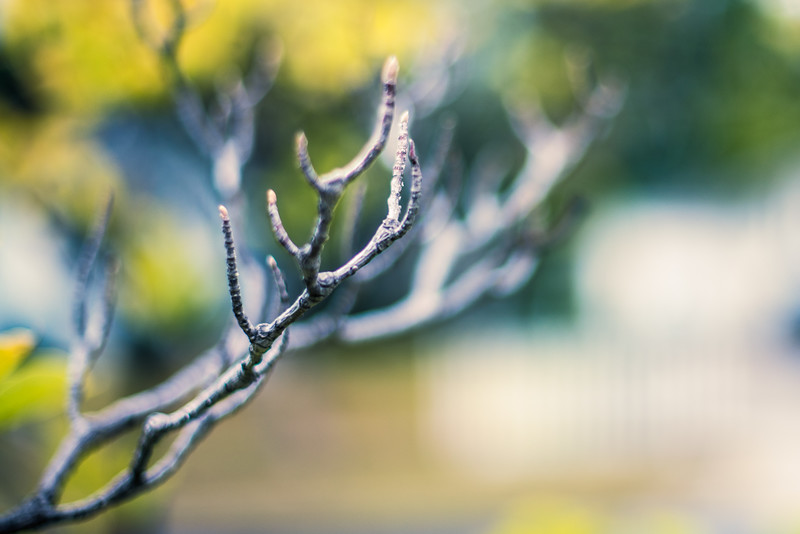 Antler Branch