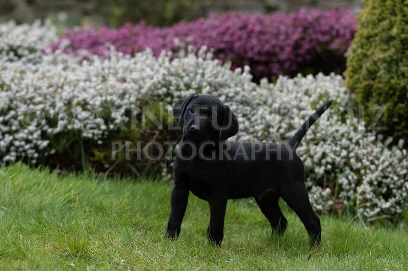 Weika Puppies 24 March 2019-6479.jpg