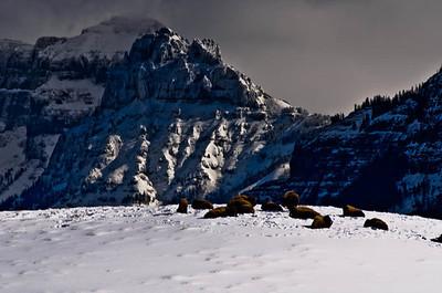 Images of  Yellowstone & Tetons