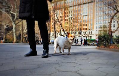 Dogs of NY