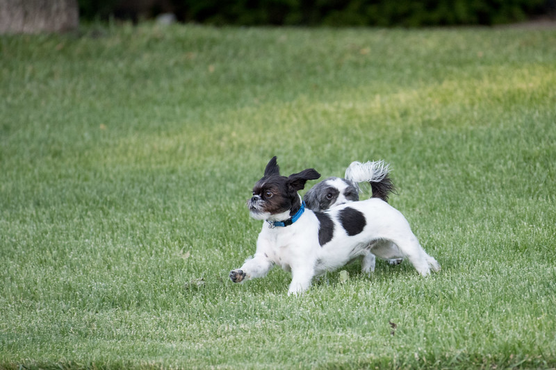 LuLu - Brady - Cooper Play Friends (31 of 109).jpg