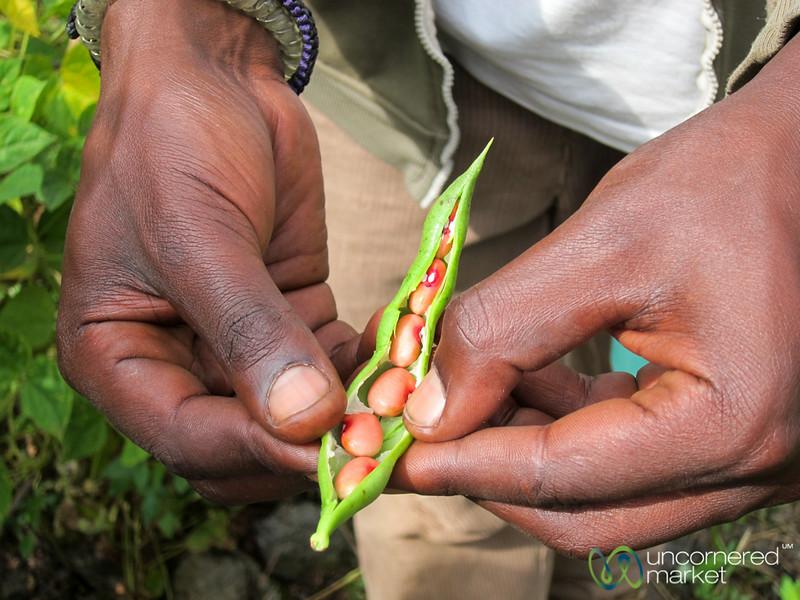Fresh Beans in the Pod - Musanze, Rwanda
