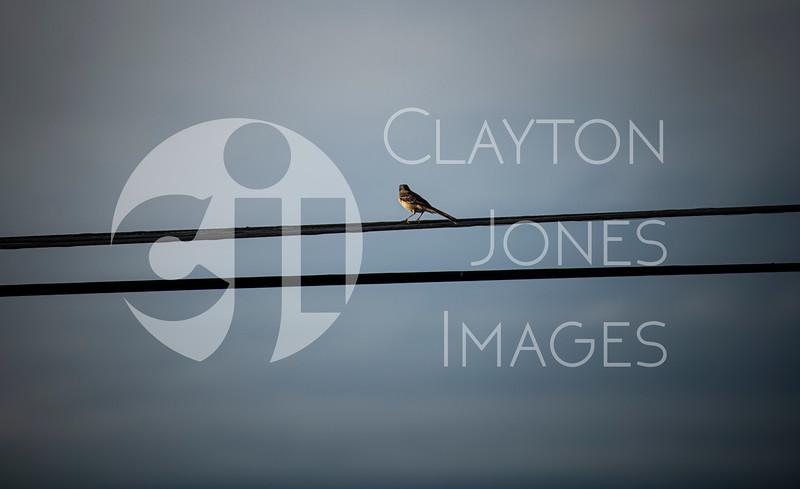 dallas_bird_1.jpg