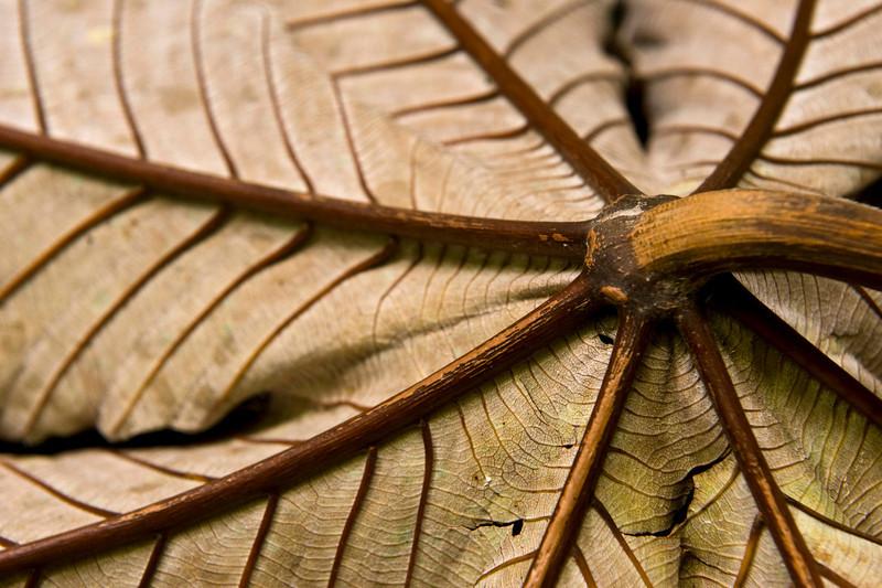Leaf detail, Arenal Hanging Bridges