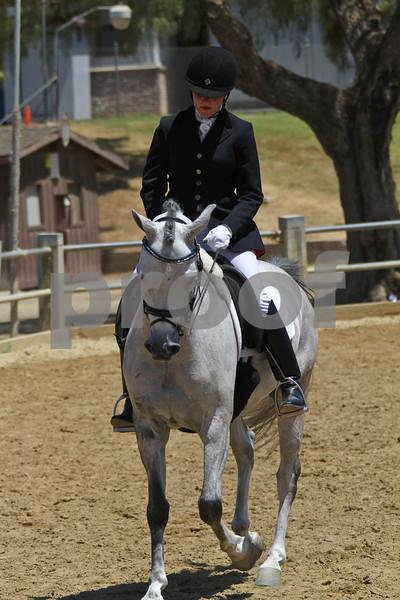 Arabian SH Under Saddle - ATR