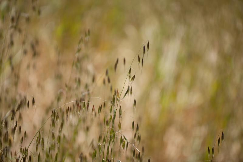 Garden Macro-0738.jpg
