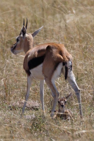 Kenya 2015-04488.jpg