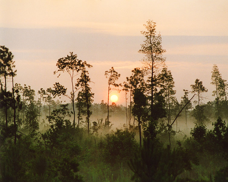 010 sunrise web.jpg