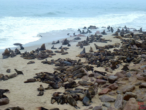 Cape cross fur seal colony, Namibia photo 1