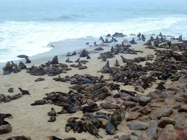 Cape cross fur seal colony, Namibia photo 1