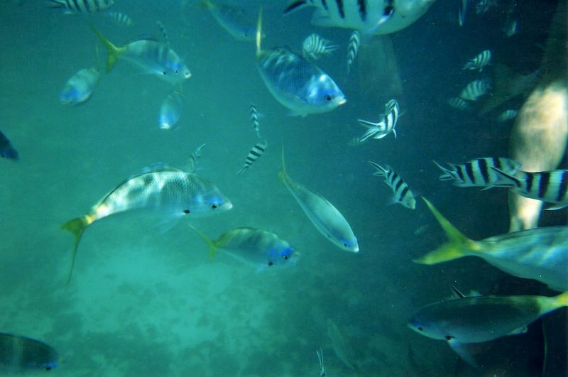 fish_4.jpg