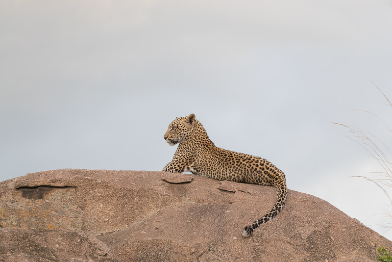 Africa  - 101016- 098-Edit.jpg