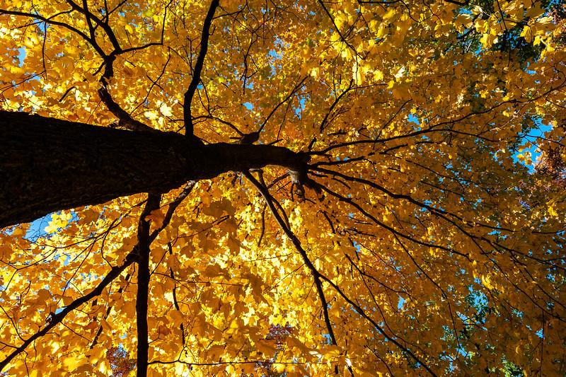 Fall_20201008_094216.jpg