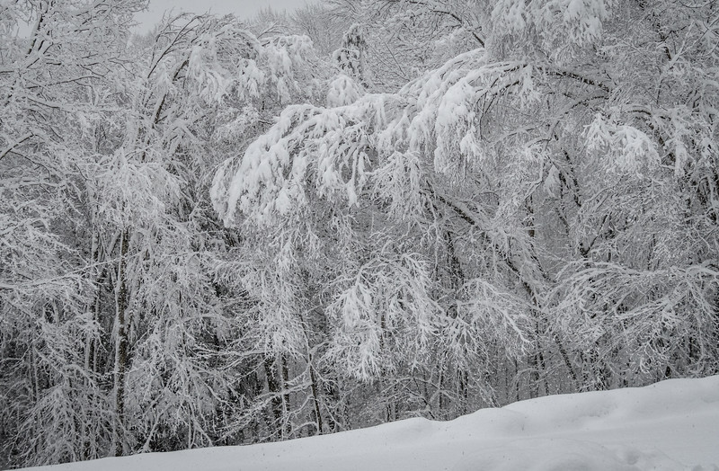 November 2018 Snowfall-_5009220.jpg