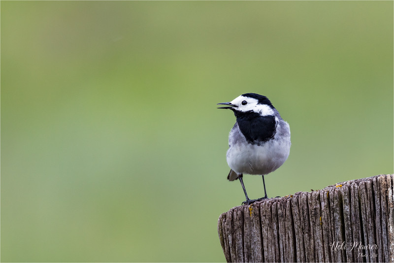 2018-05-02 BirdLife Neeracherried 0U5A9107.jpg
