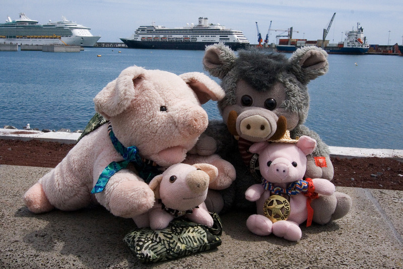 Pigs and and Ship.jpg