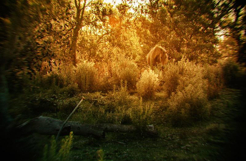 Hiding In Sunset's Last Glow