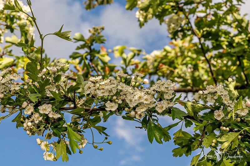 Beautiful blossom in the garden.jpg