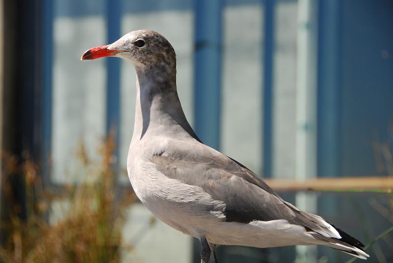 A bird.  Yes, another bird.