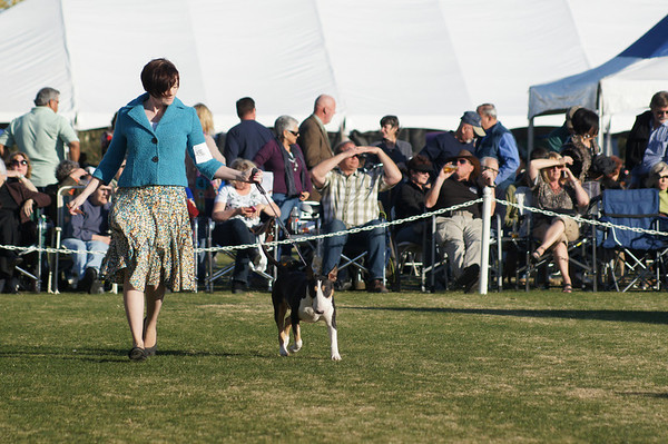 Palm Springs Kennel Club day one