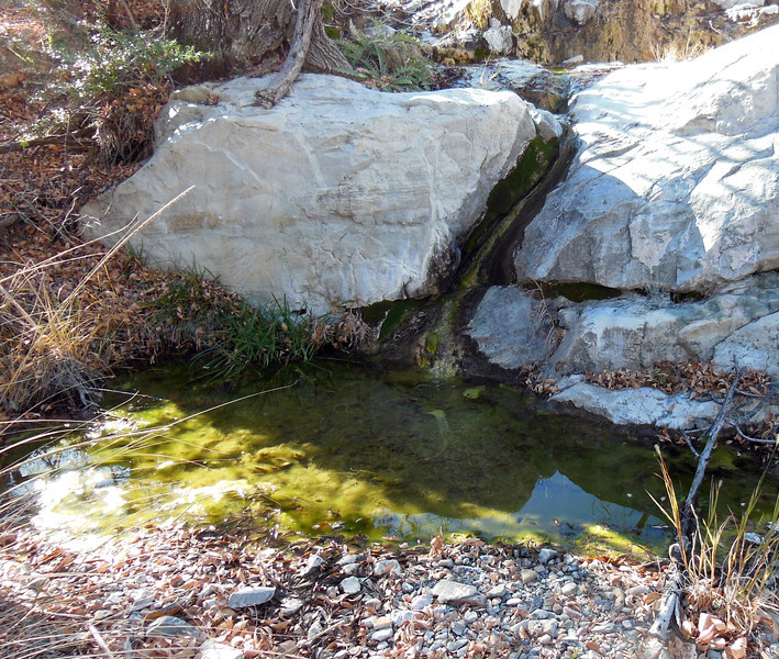 Lot's of water here.  this is in a small canyon immediately S of the last saddle on our route before dropping down to the Elephant Tusk Trail and on to the Dodson Trail at Fresno Creek.