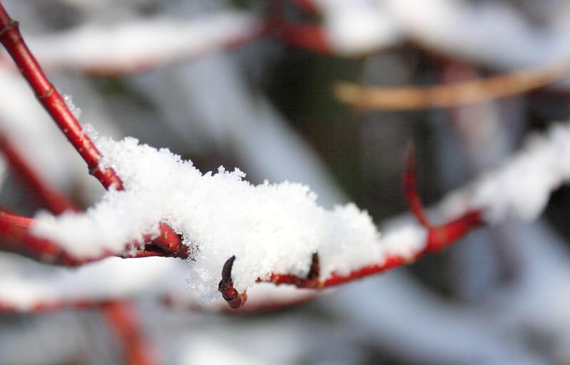 snow Feb 2012__006.JPG