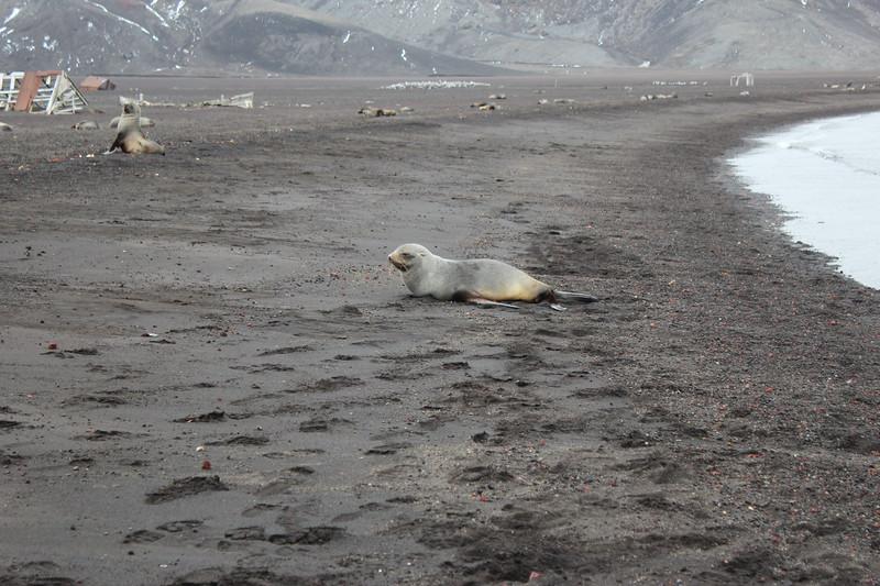 Antarctica 055.JPG