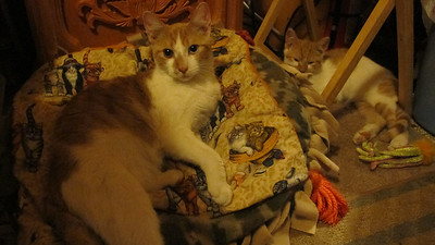 My New Cats, My House, Tamaqua (10-17-2014)