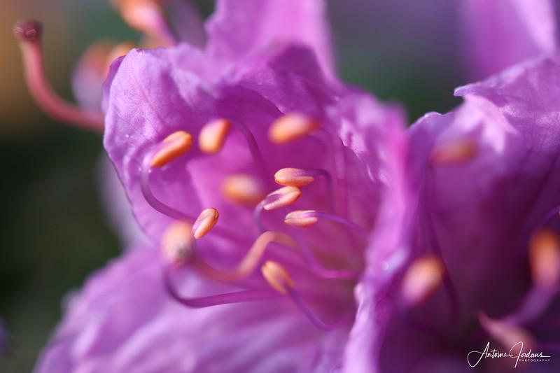 2011 Spring