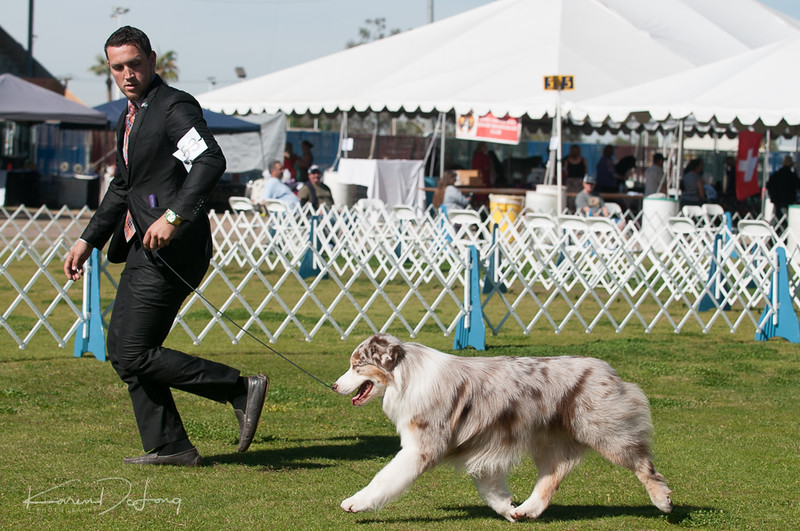 20170205_Australian Shepherds_Lost Dutchman Kennel Club-201.jpg
