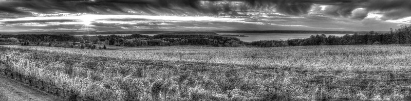 Old Mission Peninsula Vineyard (black and white)